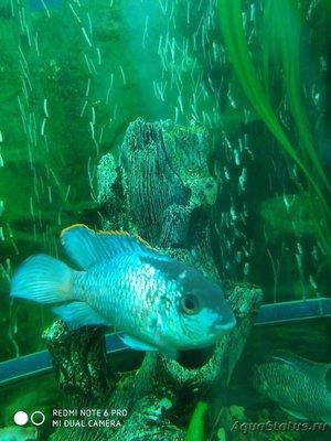 Определение и диагностика болезней у аквариумных рыб - IMG_20191105_194629.jpg
