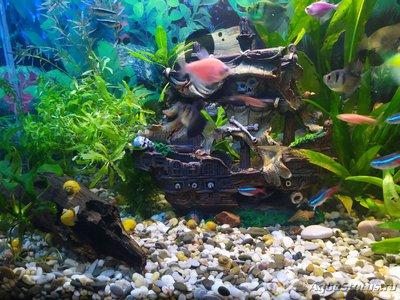 Мой первый аквариум 80 литров Ctacia90  - IMG_20191210_085815.jpg