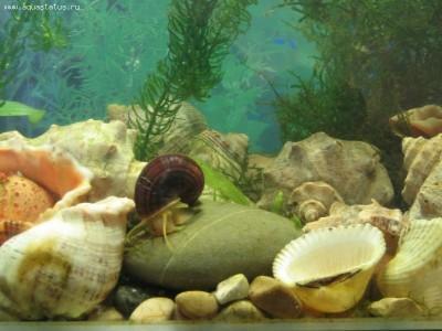 Мой аквариум Рождение нового аквариумиста 20 литров and-majboroda  - IMG_0031.JPG