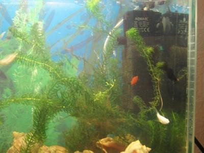 Мой аквариум Рождение нового аквариумиста 20 литров and-majboroda  - IMG_0029.JPG