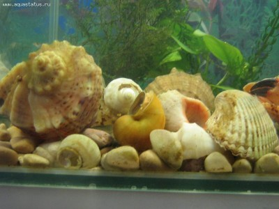 Мой аквариум Рождение нового аквариумиста 20 литров and-majboroda  - IMG_0025.JPG