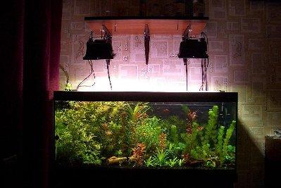 Один из моих первых аквариумов 180 литров Roman  - lll.JPG