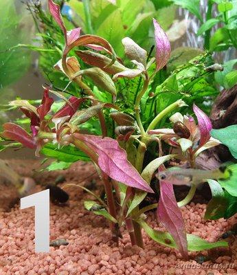 Опознание аквариумных растений - 20191228_055701.jpg