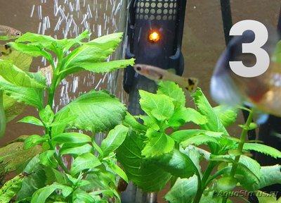 Опознание аквариумных растений - 20191228_055816.jpg