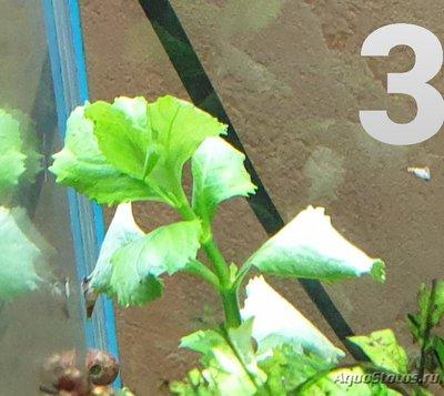 Опознание аквариумных растений - 20191228_055748.jpg