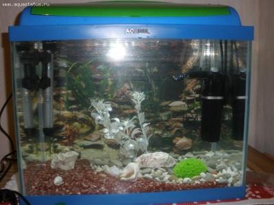 Мой первый аквариум 30 литров kirill.  - PB040135.JPG