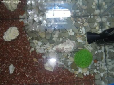 Мой первый аквариум 30 литров kirill.  - PB040139.JPG