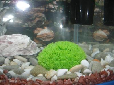 Мой первый аквариум 30 литров kirill.  - PB040138.JPG