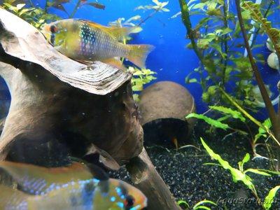 Определение и диагностика болезней у аквариумных рыб - IMG_20200108_142851.jpg