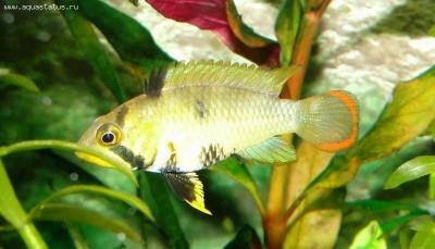 Мой аквариум 100 литров НастенА  - DSC05901.JPG