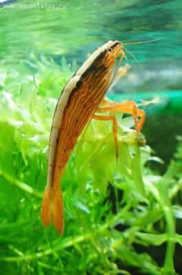 Мой аквариум 100 литров НастенА  - DSC05893.JPG