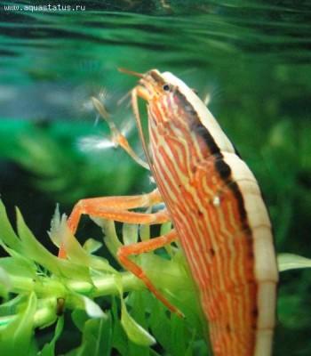 Мой аквариум 100 литров НастенА  - DSC05904.JPG