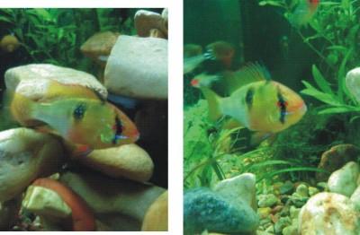 Помогите опознать рыбку опознание рыб  - 777777777777777.jpg