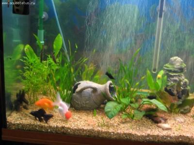 Перенаселение аквариума - 2.jpg
