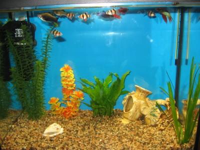 Мой аквариум 30 литров Елена  - IMG_0192.jpg