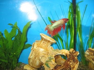 Мой аквариум 30 литров Елена  - IMG_0210.jpg