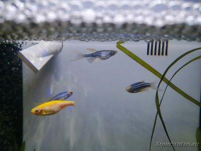 Как узнать пол у рыбок? - IMG_20200225_150544.jpg