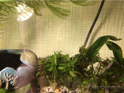Опознание аквариумных растений - image.jpeg