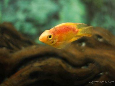 Определение и диагностика болезней у аквариумных рыб - _MG_5449.jpg