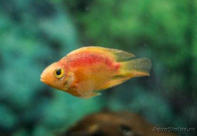 Определение и диагностика болезней у аквариумных рыб - _MG_5513.jpg