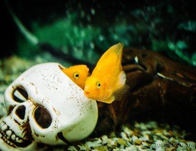 Определение и диагностика болезней у аквариумных рыб - _MG_5394.jpg