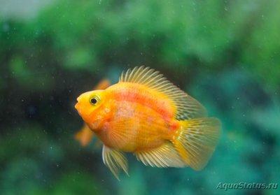 Определение и диагностика болезней у аквариумных рыб - _MG_5457.jpg