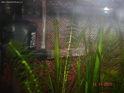 Рассекатель распылитель из шприца - DSC03392.JPG