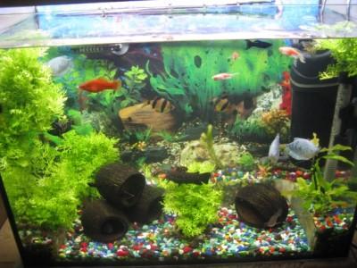 Мой аквариум 80 литров лёва  - IMG_1023.jpg