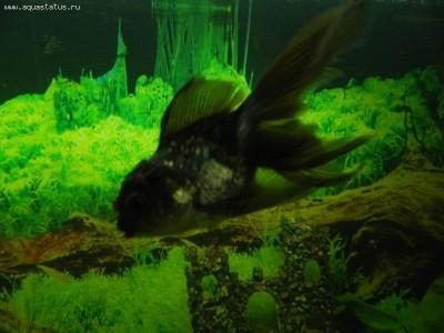 Рыбы заболели - Изображение 006.jpg