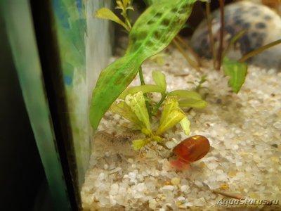 Опознание аквариумных растений - 20200402_152146.jpg