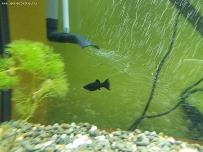 Помогите опознать рыбку опознание рыб  - рыбки 022.jpg