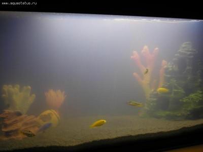 Мутная вода в аквариуме, муть в аквариуме - PB142658.JPG