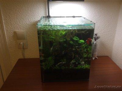 Покровное стекло на аквариум - image.jpg