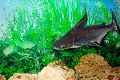 Помогите с названием Рыб - IMG_1471.jpg