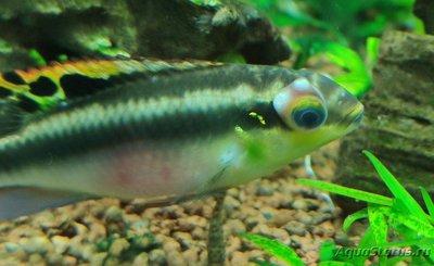 Определение и диагностика болезней у аквариумных рыб - IMG_20200506_205532_1-01.jpeg