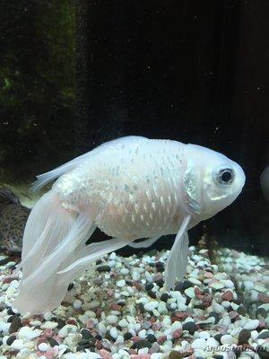 Определение и диагностика болезней у аквариумных рыб - 9ei_W0Sku3g.jpg