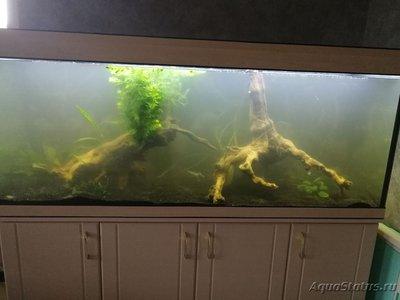 Критические ситуации в аквариуме - как себя вести? - IMG_20200525_184221.jpg