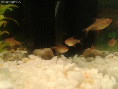 Помогите опознать рыбку опознание рыб  - 2011-11-18 22.04.45.jpg