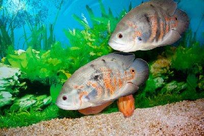 Помогите с названием Рыб - 5.jpg