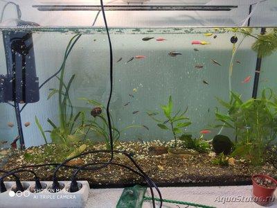 Критические ситуации в аквариуме - как себя вести? - 15929924300882321079083528331293.jpg