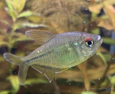 Определение и диагностика болезней у аквариумных рыб - 41027091-2705-43CC-B8FD-A206BCD2DA85.jpeg