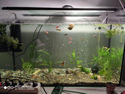 Критические ситуации в аквариуме - как себя вести? - IMG_20200623_230035.jpg