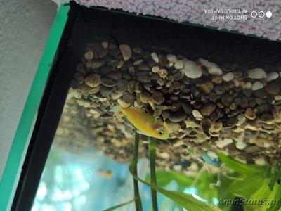 Критические ситуации в аквариуме - как себя вести? - IMG_20200624_123739.jpg