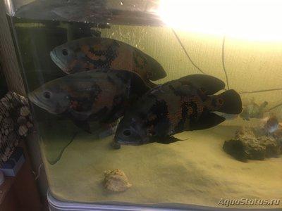 Определение и диагностика болезней у аквариумных рыб - 9A3C9377-868D-4A10-9F1C-1DFD262FBA79.jpeg
