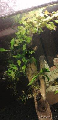 Опознание аквариумных растений - IMG-20201013-WA0002.jpg