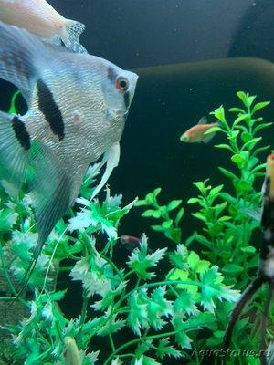 Определение и диагностика болезней у аквариумных рыб - IMG-066f2a251b4b92f6dc6d1c27e7fa8cbb-V.jpg
