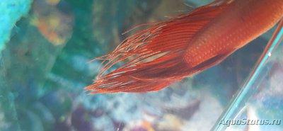 Определение и диагностика болезней у аквариумных рыб - 20201116_225217.jpg