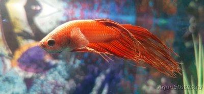 Определение и диагностика болезней у аквариумных рыб - 20201116_190254.jpg