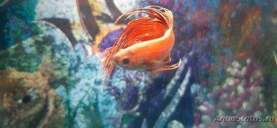 Определение и диагностика болезней у аквариумных рыб - 20201116_190134.jpg