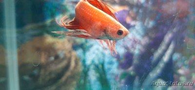 Определение и диагностика болезней у аквариумных рыб - 20201116_190130.jpg